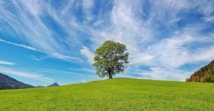 Puu nurmikolla sinistä taivasta vasten.
