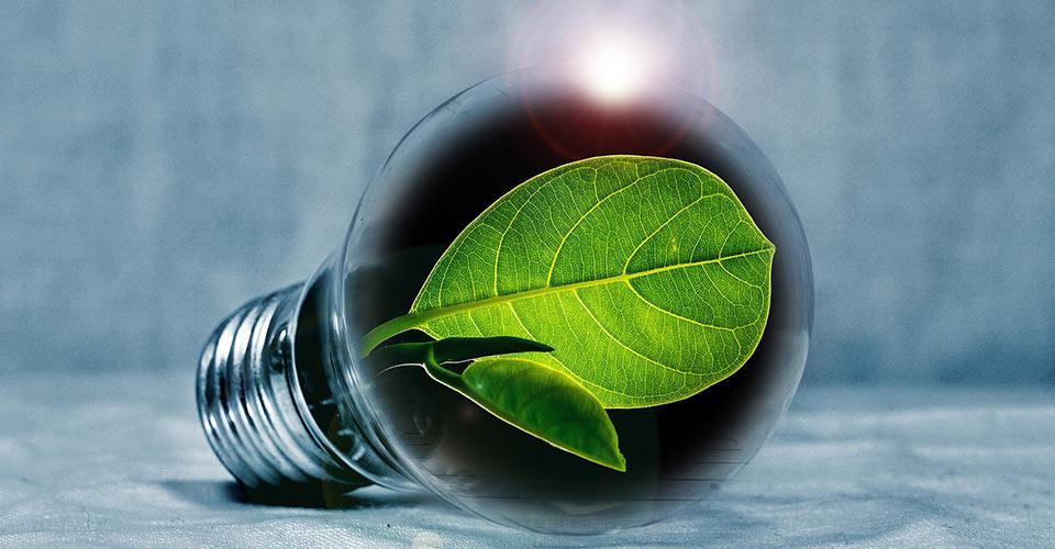 Hehkulamppu, jonka sisällä on vihreitä lehtiä.